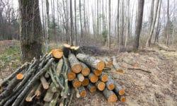 Die Hessische Forstwirtschaft spielt eine wichtige Rolle
