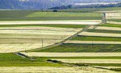Landnutzung ist: Landwirtschaft, Forstwirtschaft und Landnutzungsveränderungen
